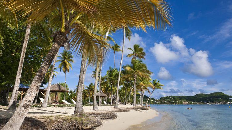 La plage de Pointe-Marin à Sainte-Anne (Martinique) en 2010. (GUIZIOU FRANCK / HEMIS.FR / AFP)