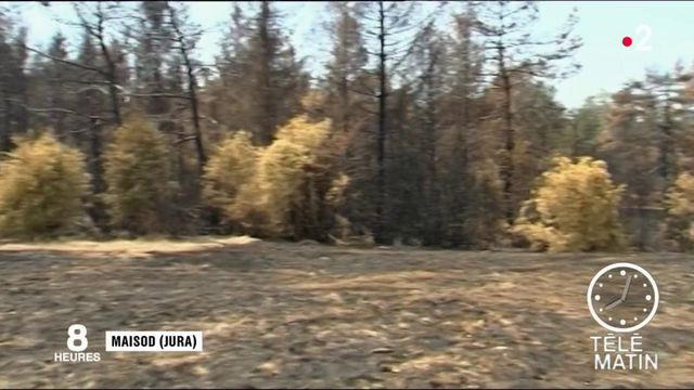Feux de forêt : les pompiers aux aguets