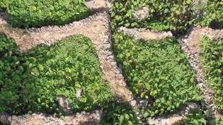 Cap Vert : la vallée de Paul, un endroit merveilleux (France 2)