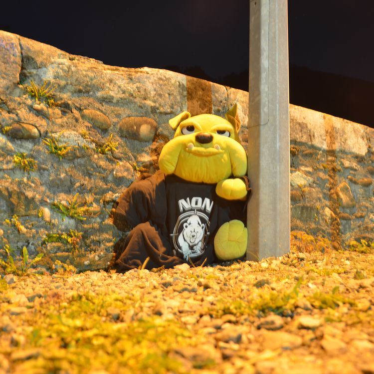 La mascotte des opposants à la réintroduction de l'ours, le 29 septembre 2018 à Sarrance (Pyrénées-Atlantiques). (THOMAS BAIETTO / FRANCEINFO)