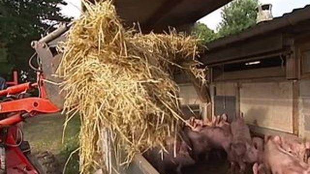 Le porc bio, un marché qui rapporte