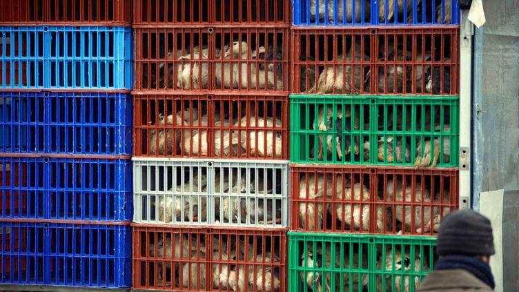 Un élevage de canards à Toulouse, le 13 janvier 2021. (ALAIN PITTON / NURPHOTO / AFP)