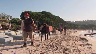 Var : à Ramatuelle, des ânes aident à nettoyer la plage (France 2)