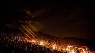 Un viticulteur allume des feux de brasero pour protéger ses vignes du gel, le 7 avril 2021 en Bourgogne. (JEFF PACHOUD / AFP)