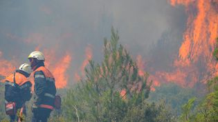 Incendie de pinède à Mailhac et aux abords de Bizes-Minervois (Aude), le 13 juillet 2016. (MAXPPP)