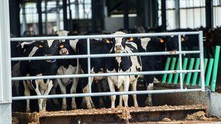 La ferme des 1 000 vaches à Drucat (Somme), le 30 mai 2015. (PHILIPPE HUGUEN / AFP)