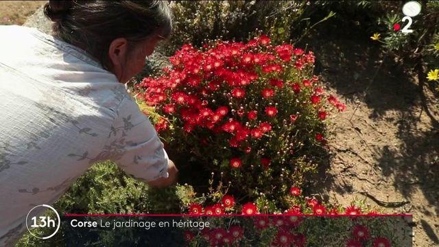Corse : le parc de Saleccia, une affaire de famille