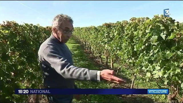 Bourgogne : des patrouilles pour protéger les vignobles des voleurs