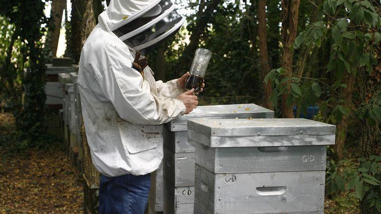 Un apiculteur et ses ruches àCastillon-la-Bataille (Gironde), en juillet 2008. (JEAN-PIERRE MULLER / AFP)