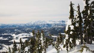 Les arbres de montagne sont un outil précieux pour nous aider à mieux comprendre et nous protéger du risque d'avalanches. (MAXPPP)