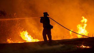 Un pompier tente de maîtriser un violent feu de forêt près de Clearlake, à l'ouest de Sacramento (Californie, Etats-Unis), le 2 août 2015. (JOSH EDELSON / AFP)