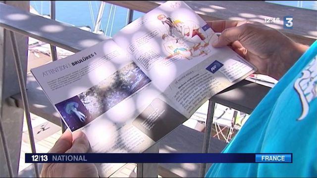Côte d'Azur : Des filets pour rassurer les baigneurs des méduses