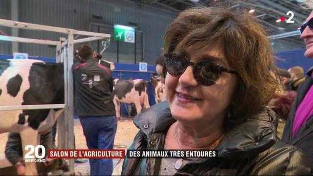 Salon de l'Agriculture : les animaux sont-ils bien entourés ?