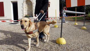 Un éducateur avec un chien-guide d'aveugle, le 7 septembre 2011 à Paris. (FRANCOIS GUILLOT / AFP)