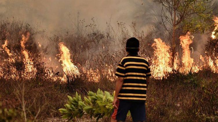10 millions d'hectares de forêts ont été détruits en Indonésie par les incendies en 2015. (AFP/Bay Ismoyo)