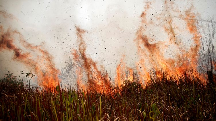 Des flammes dans la forêt amazonienne, à Porto Velho, au Brésil, le 24 août 2019. (UESLEI MARCELINO / REUTERS)