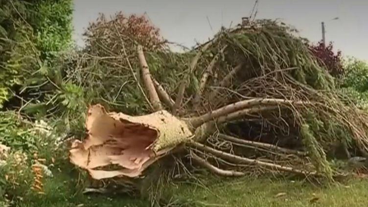 La région des Hauts-de-France a été touchée par trois orages dans la nuit de mercredi 19 à jeudi 20 juin, qui ont laissé d'importants dégâts dans plusieurs villages. (FRANCE 3)