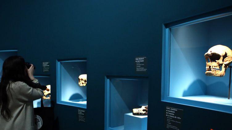 Dans l'exposition Néandertal au Musée de l'Homme.  (Elise Chiari/PHOTOPQR/VOIX DU NORD/MAXPPP)