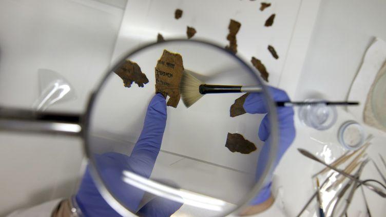 Tanya Treiger, conservatrice à l'Autorité israélienne des antiquités, travaillait sur des fragments des manuscrits de la mer morte en 2016. (GALI TIBBON / AFP)