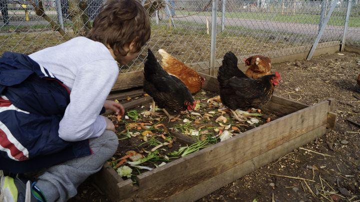 Les enfants adorent s'occuper des poules. (ISABELLE MORAND / CRCV / RADIO FRANCE / FRANCE INFO)