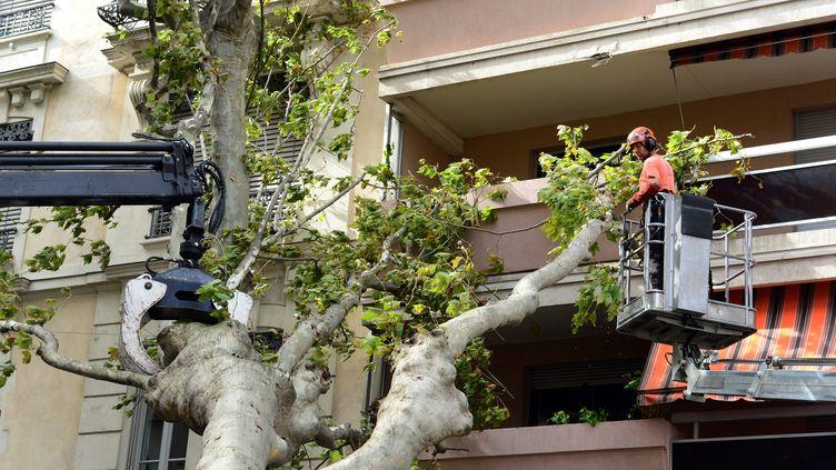Un platane arraché par le vent s'est abattu sur un immeuble à Lyon, sans faire de victimes, le 16 septembre 2015. (  MAXPPP)