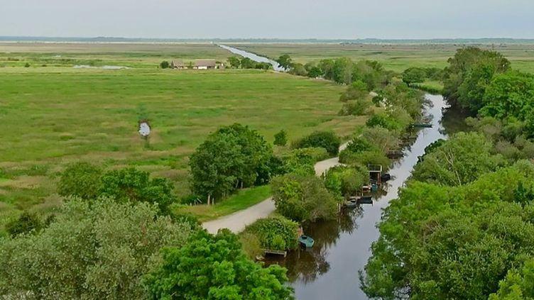 La rédaction du 13 Heures vous emmène à la découverte des marais du parc naturel de la Brière, en Loire-Atlantique. (FRANCE 2)