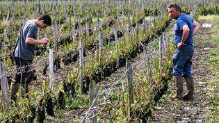 Des vignerons constatent les dégâts dans un vignoble de Vouvray (Indre-et-Loire), le 17 juin 2013. ( MAXPPP)