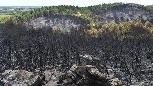 Une pinède de l'Hérault dévastée par les flammes en août 2017. (PASCAL GUYOT / AFP)