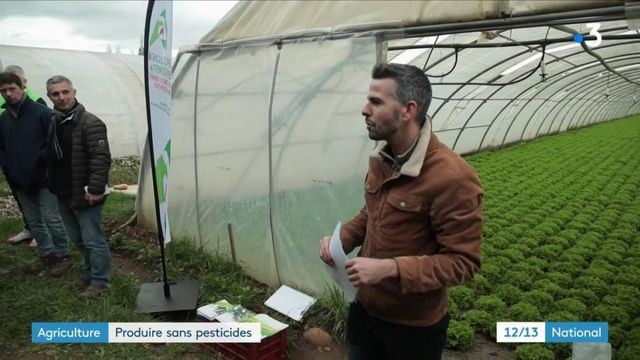 Pesticides : accompagner les agriculteurs vers le bio