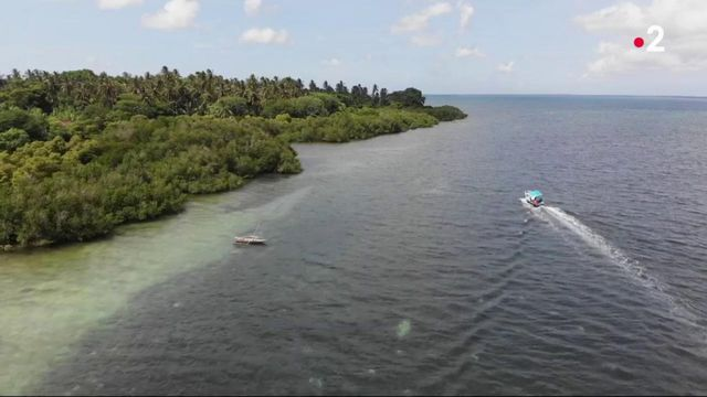 Tanzanie : à la découverte des requins-baleines de l'île de Mafia.