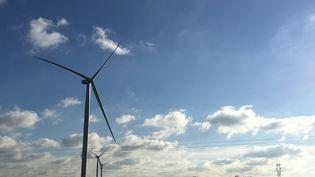 """Des éoliennes installées par l'association citoyenne """"À tous vents"""" à Chemillé-en-Anjou, près d'Angers. (GREGOIRE LECALOT / RADIOFRANCE)"""