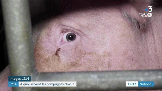 Protection animale : à quoi servent les campagnes choc de L214 ?