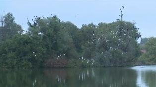 Autour de Saint-Omer (Pas-de-Calais), dans le marais audomarois, on découvre un étonnant labyrinthe de canots. Pour visiter ce territoire préservé, mais fragile, il faut embarquer dans les traditionnelles barques à fond plat. (CAPTURE D'ÉCRAN FRANCE 3)