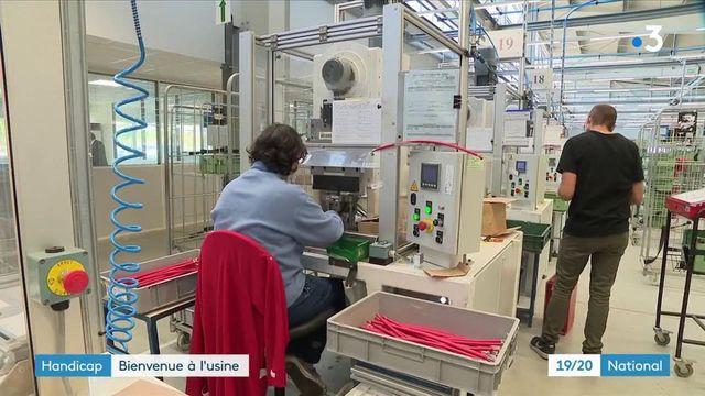 Emploi : à Cholet, une entreprise favorise l'insertion professionnelle de personnes en situation de handicap cognitif