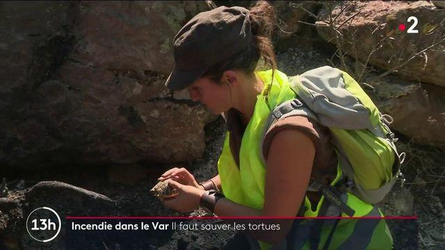 Incendies : mobilisation pour sauver les tortues d'Hermann du Var
