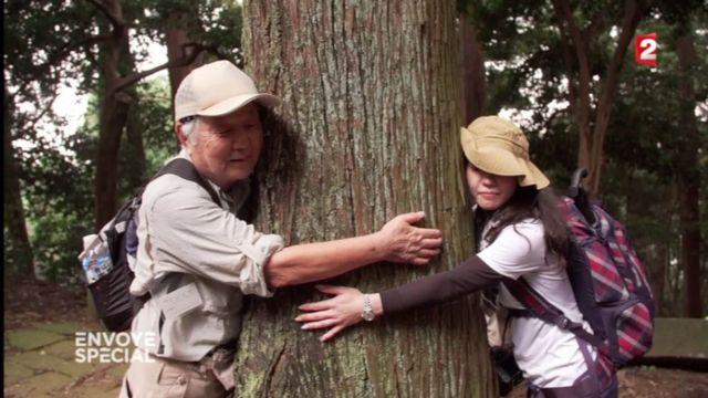 Envoyé spécial. Enlacer les arbres, une thérapie toute naturelle au Japon