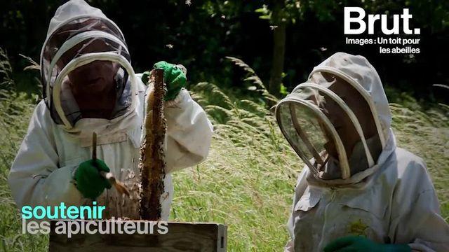"""La situation des abeilles est critique avec une mortalité d'environ 30 % en France. L'apiculteur Régis Lippinois a voulu soutenir ses homologues en créant """"Un toit pour les abeilles""""."""