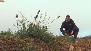 Face au réchauffement climatique, l'agriculture doit s'adapter. En Bourgogne, les céréaliers expérimentent par exemple de nouvelles cultures. Des pratiques qui ont changé les paysages. (CAPTURE ECRAN FRANCE 3)