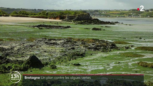 Algues vertes : les autorités bretonnes demandent l'aide des agriculteurs