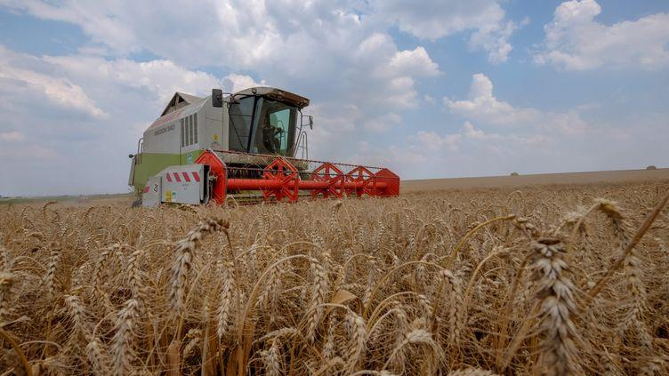 Une exploitation agricole à Sebourg (Nord), le 25 juillet 2018. (1 / MAXPPP)
