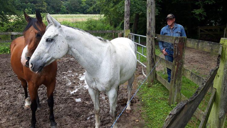 Une partie des chevaux de François Lejour, responsable du centre équestre des Acacias à Marines (Val-d'Oise). (SANDRINE ETOA-ANDEGUE / RADIO FRANCE)