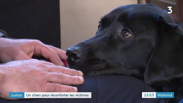 Justice : un chien pour réconforter les victimes au tribunal