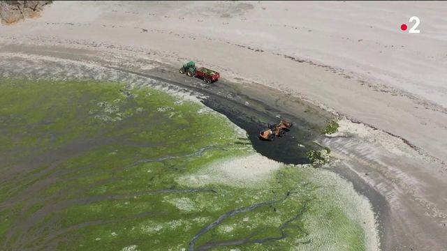 Bretagne : la justice ordonne à l'Etat d'accélérer la lutte contre les algues vertes