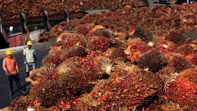 Sur cette photo, une récolte de fruits de palmiers à huile dans l'usine de Sepang, à l'extérieur de Kuala Lumpur, le 18 février 2014. ( REUTERS / Samsul Said)