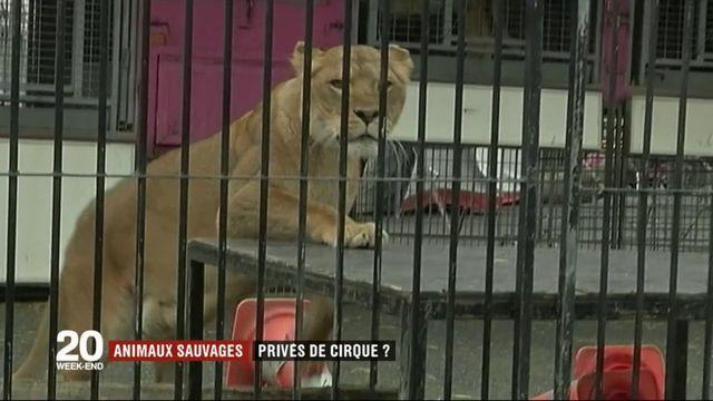 Animaux sauvages : privés de cirque ?