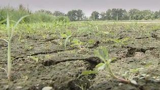 Connue pour ses milliers d'étangs, la Dombes, dans l'Ain, a été placée en alerte sécheresse. Les pisciculteurs sont inquiets. (FRANCE 3)