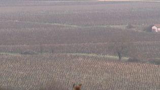 Les vignes de Beaune (Côte-d'Or). (FRANCE 2)