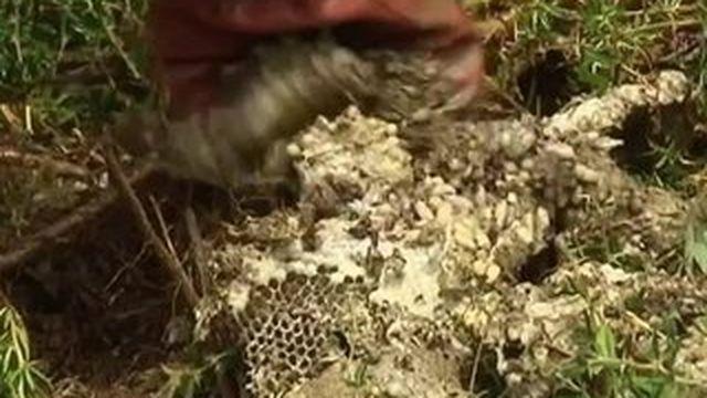 Que faire lorsqu'on découvre un nid de guêpes ?