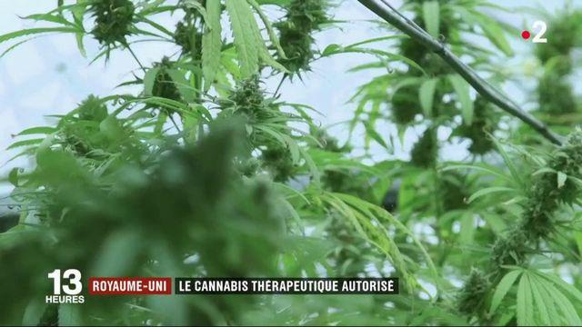 Cannabis : le Royaume-Uni l'autorise à usage thérapeutique