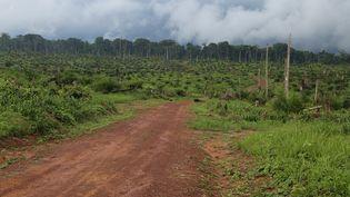 Une vue de la forêt après la destruction de quelque 850 hectares près de Kisangani, dans le nord-est de la République démocratique du Congo, le 25 septembre 2019. (SAMIR TOUNSI / AFP)